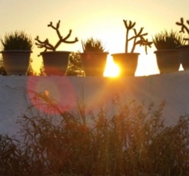 the sun shining tover top of a white painted block wall with pots of cactus plants sitting on top of it